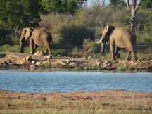 Watering hole with 2 elephants walking away from the hole about a metre or so apart